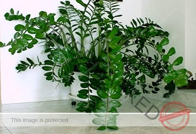 Почистване на негативната енергия със стайни растения