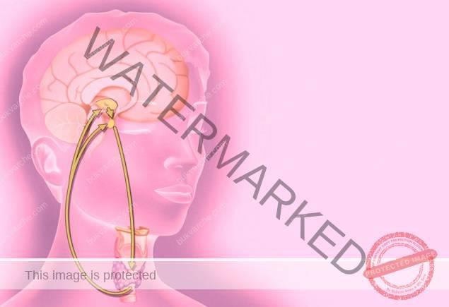 Недостиг на хормони - как да определите кои са те?