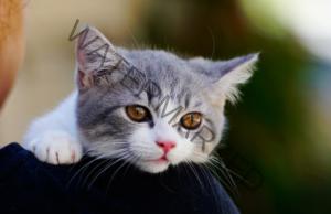 Лечебната сила на котките и как те помагат на стопаните си?