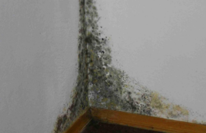 Домашно средство срещу мухъл, безвредно за здравето
