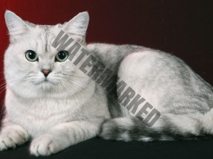 Идентифициране на негативната енергия, благодарение на котката