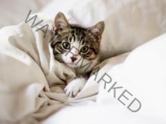 Лечебните свойства на котките: 10 причини да си вземете котка