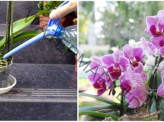 Подхранване на орхидеята с бананова кора по време на цъфтеж
