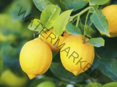 Високите дози витамин С убиват вирусите и се справят с настинката