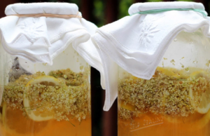 Домашен мед от бъз: натурален лек за белите дробове