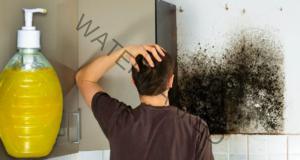 Досадният мухъл лесно може да бъде премахнат