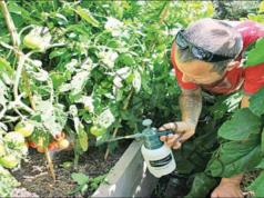 Полезните свойства на бакпулвера за градината и цветята