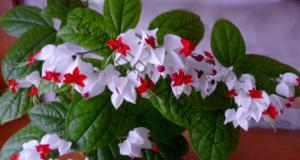 Стайни растения - ето как да се грижите правилно за тях