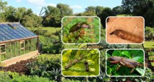 Телените червеи ще напуснат градината ви с тези прости трикове