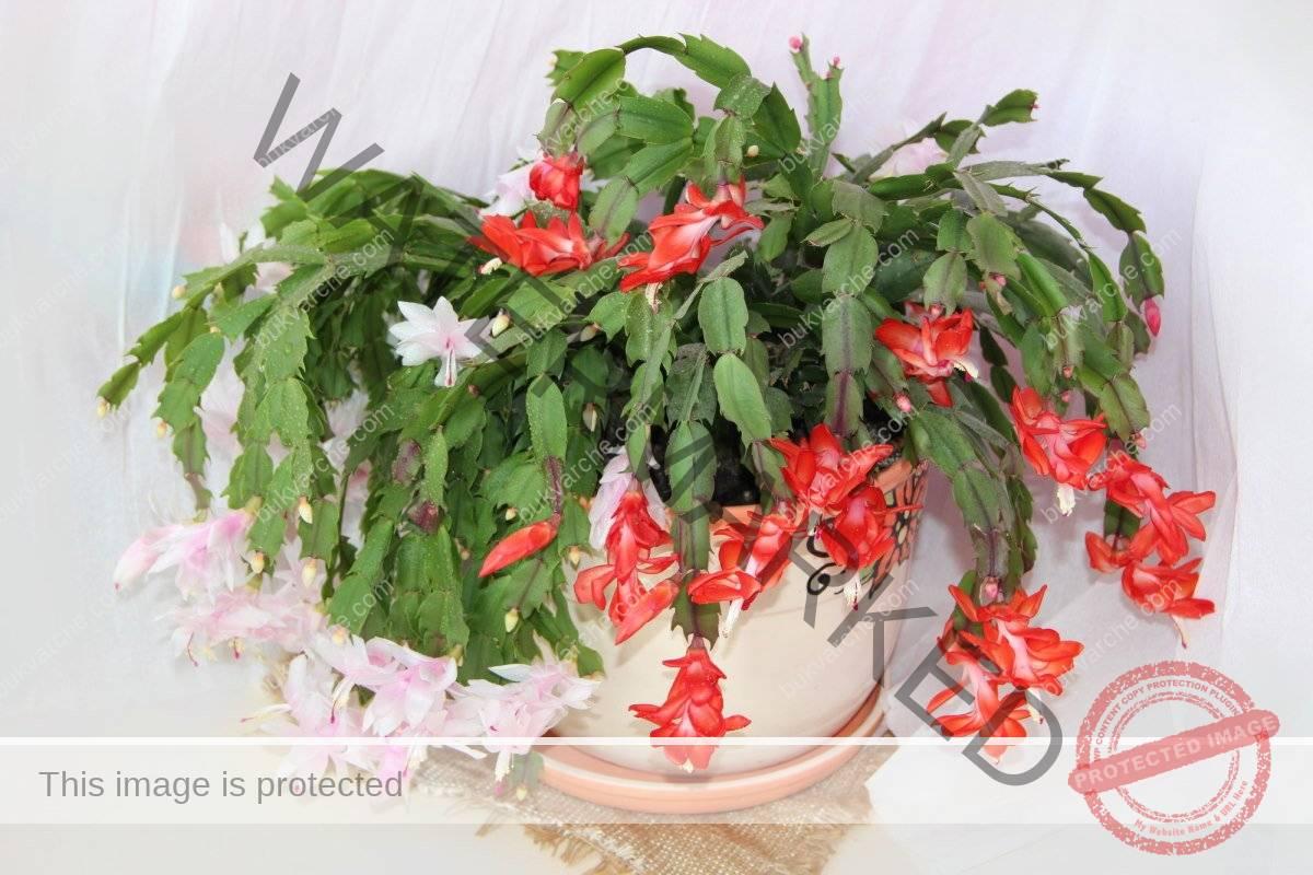 Вредные растения для дома