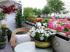 Буен цъфтеж и листа: поливайте растенията с този разтвор!
