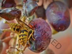 Мравките и осите вече не са проблем. Ето как да се отървете от тях