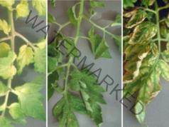 Подхранване на доматите - ето какви торове да използвате