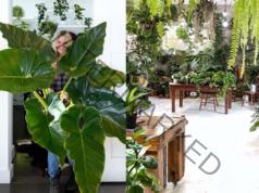 Полезни стайни растения, които връщат любовта в дома