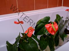 Топъл душ за стайните растения. Ето какви са ползите