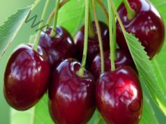 Чай от черешови дръжки при високо кръвно налягане