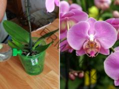Бананова кора за подхранване на орхидеите. 3 варианта