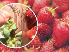 Дръжките от ягодите понижават кръвната захар и подмладяват лицето