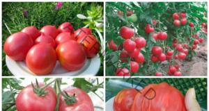 Отглеждане на домати - следвайте тези важни съвети!