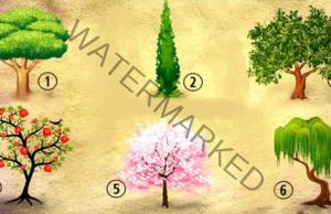 Тест с дървета - кое ви хареса най-много? Ето какво казва това за вас