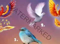 Тест с птици - разберете какви новости ви очакват скоро!
