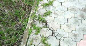 Разтвор срещу тревата по градинските пътеки. Ефективно решение