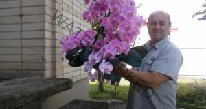 Грижи за орхидеята, за да цъфти обилно дори в жегите