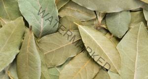 Дафиновият лист ще прогони мухите от дома ви