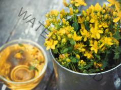 Жълтият кантарион облекчава симптомите на менопауза