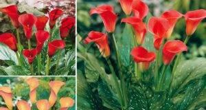 Как се прави подхранване на цветята в домашни условия?