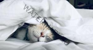 Котешкото мъркане има положителен ефект върху здравето