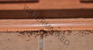 Срещу мравки - ще ви помогне смес от сода и пудра захар