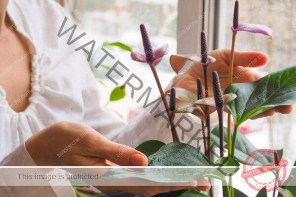 Стайни растения, които причиняват главоболие