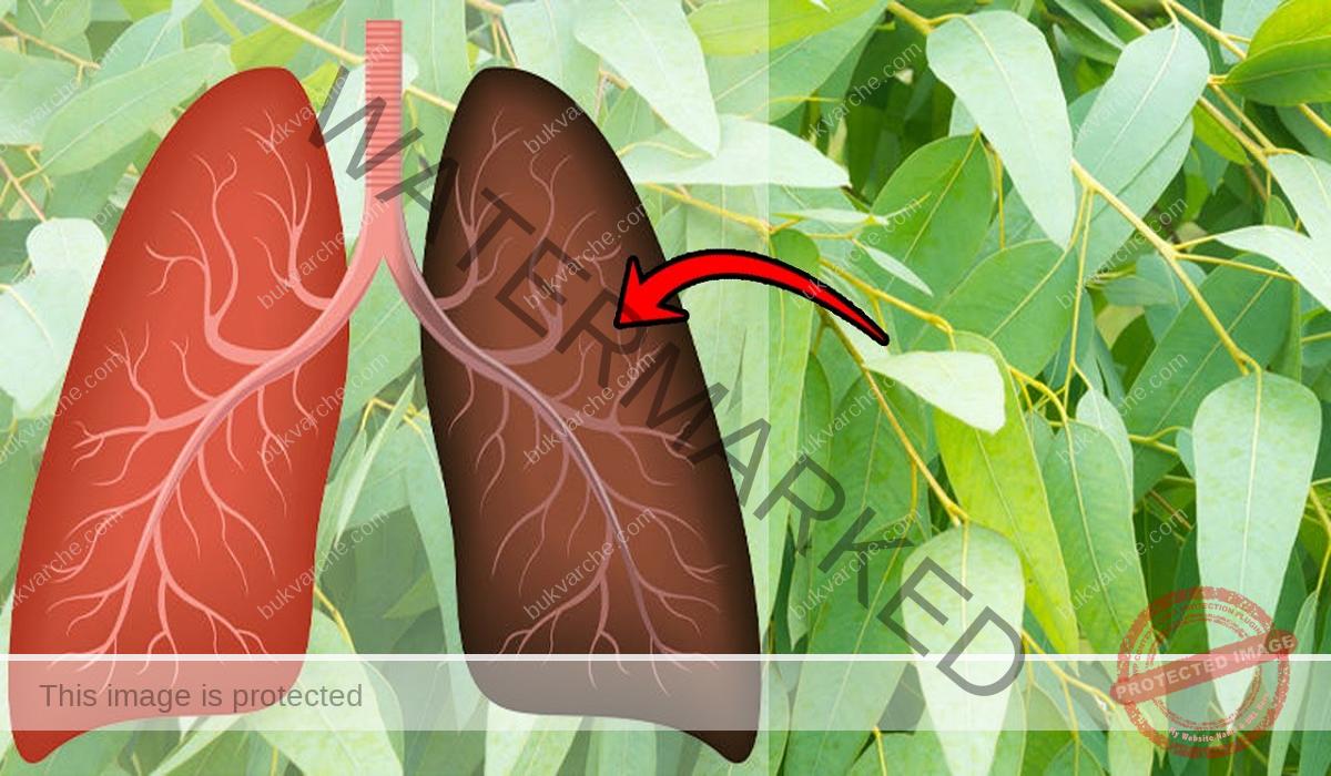 Билки при кашлица, които облекчават неприятните симптоми