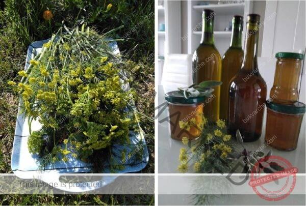 Домашен сироп за бронхит от див копър и градински чай