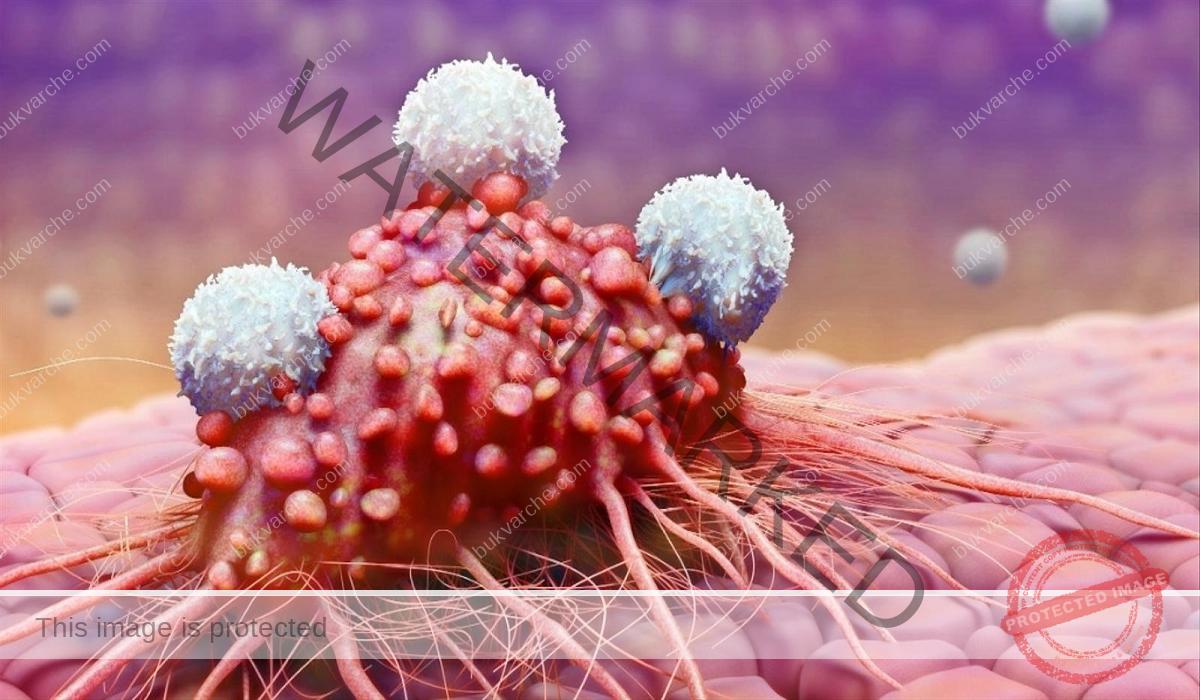 Спиране развитието на рака с консумация на червено вино