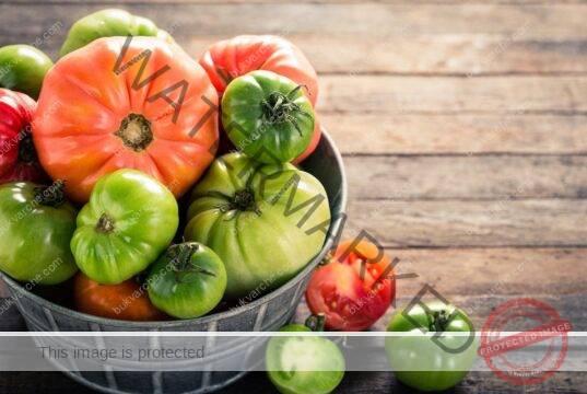 Ускоряване зреенето на доматите с много лесен трик