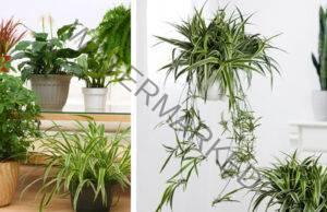 Вкореняване на резници: Размножете любимите си растения!