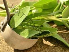 Лек за задушаваща кашлица направете си компрес от градински чай