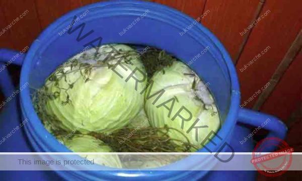 Приготвяне на кисело зеле с копър и резенчета цвекло