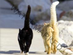 Суеверия за котки: какво означава, ако котката напусне къщата?