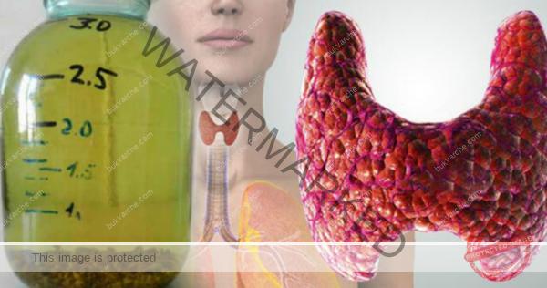 Функция на щитовидната жлеза - рецепта за нормализирането й