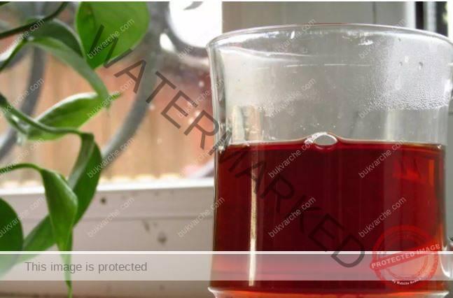 Подхранване на коледния кактус с черен чай за обилен цъфтеж