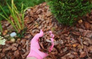 Боровата кора е отличен тор за стайните растения