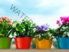 Домашен тор за цветя, който укрепва кореновата система
