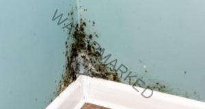 Премахване на мухъла в апартамента: 5 ефективни начина