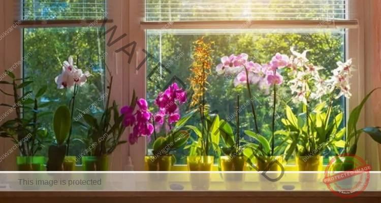 Как да спасите орхидеята, ако е започнала да съхне?