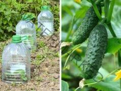 Краставиците в бутилки - метод, който решава няколко проблема