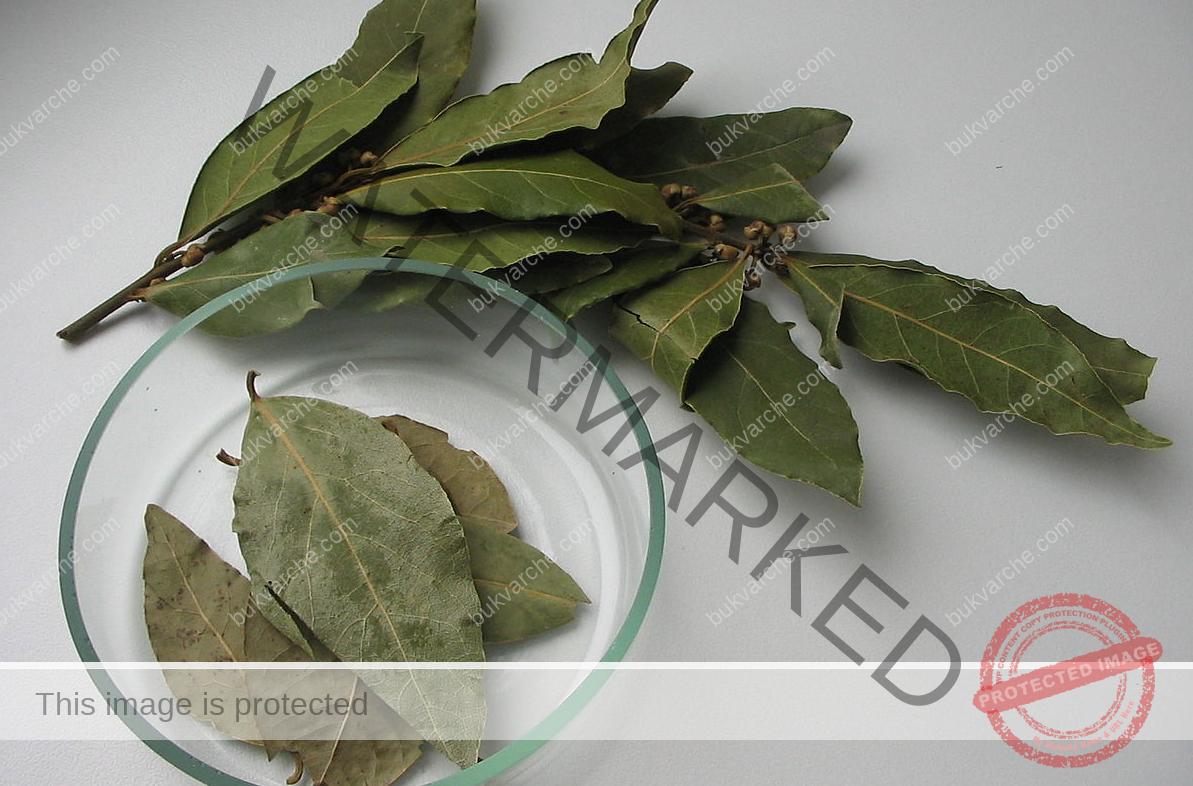 Сироп от дафинови листа при кашлица и бронхит