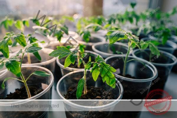 Трик за здрав разсад: добавете тази подправка при засяването